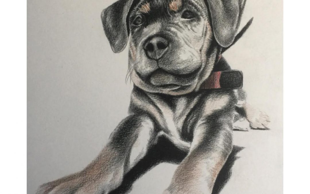 PUPPY PORTRAIT WIP #1