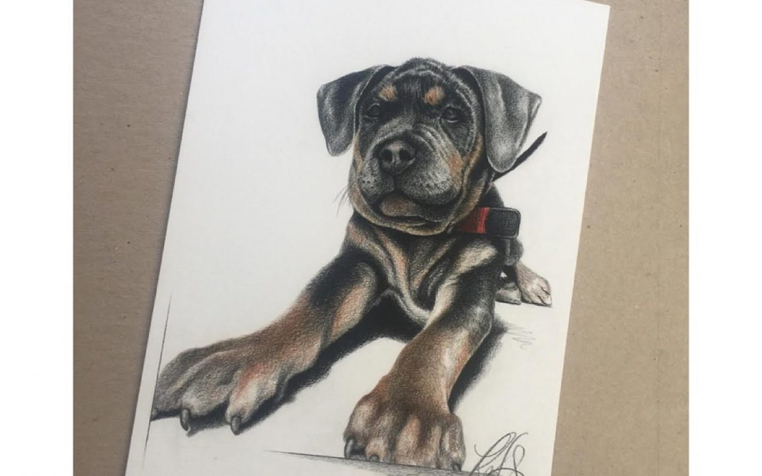 PUPPY FINISHED!